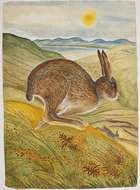 Pauline Bewick (b.1935) The Irish Hare Acrylic on paper on board, 139 x 100cm Signed, inscribed a..., Fine Irish Art at Adams Auctioneers